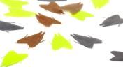 Alenko Franolic - Köcherfliegen-Flügel