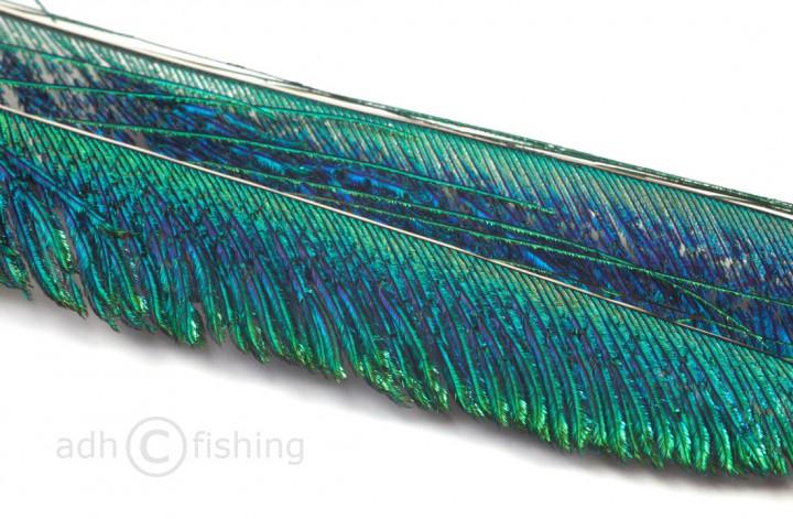 Pfauenschwertfedern 35-50 cm