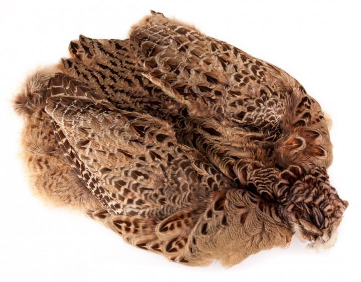 Wapsi Ringneck Pheasant Skin Ringfasan