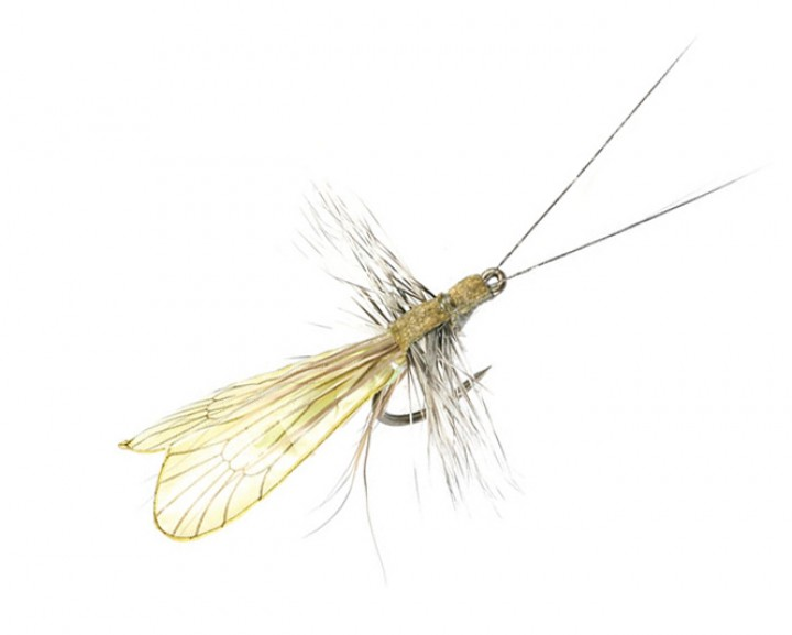 J:son Realistic Flies - Caddis Adult - saffron gold / pistachio green