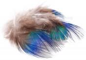 Pfau Körperfedern Peacock Blue Neck