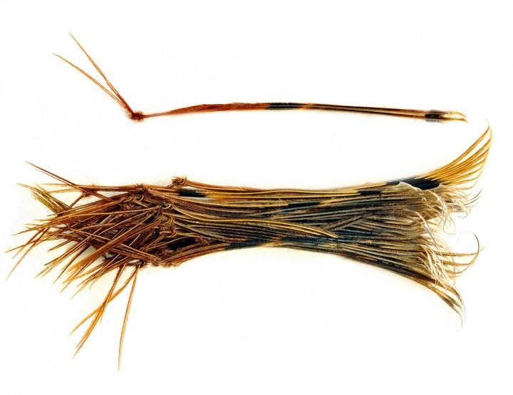 Veniard Hopper Legs Beine für Grashüpferfliege