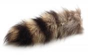 Waschbär Schwanz / Racoon Tail