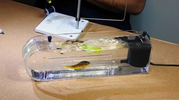 Fish Skull Fly Tester 2020