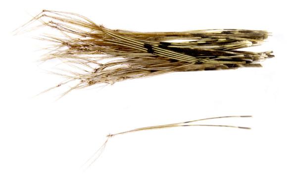 Veniard Hopper Legs Beine für Grashüpferfliege natural