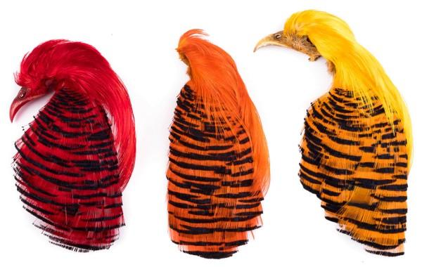 Veniard Golden Pheasant Complete Head - Goldfasan ganzer Kopf
