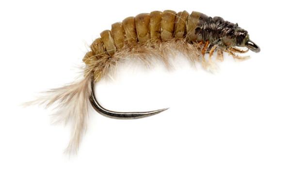 Fulling Mill Nymphe - Oliver Edwards Hydropsyche Larva